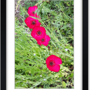 photo encadrée fleur de lin rouge