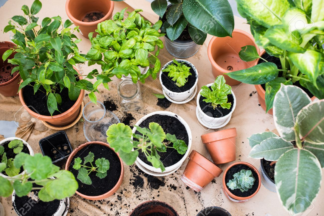 PLANTS DISPONIBLES