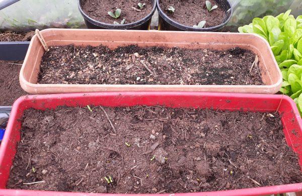effectuer ses semis en mars