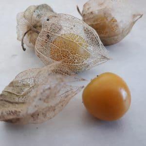 Physalis, Coqueret du Pérou