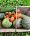 Les premières récoltes au potager de Juillet