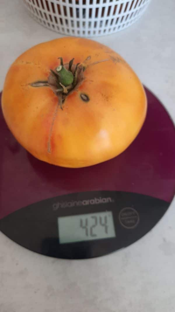 poid d'une tomate ananas
